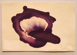 Gallery 263 Profile of Past Artists: Dena Haden